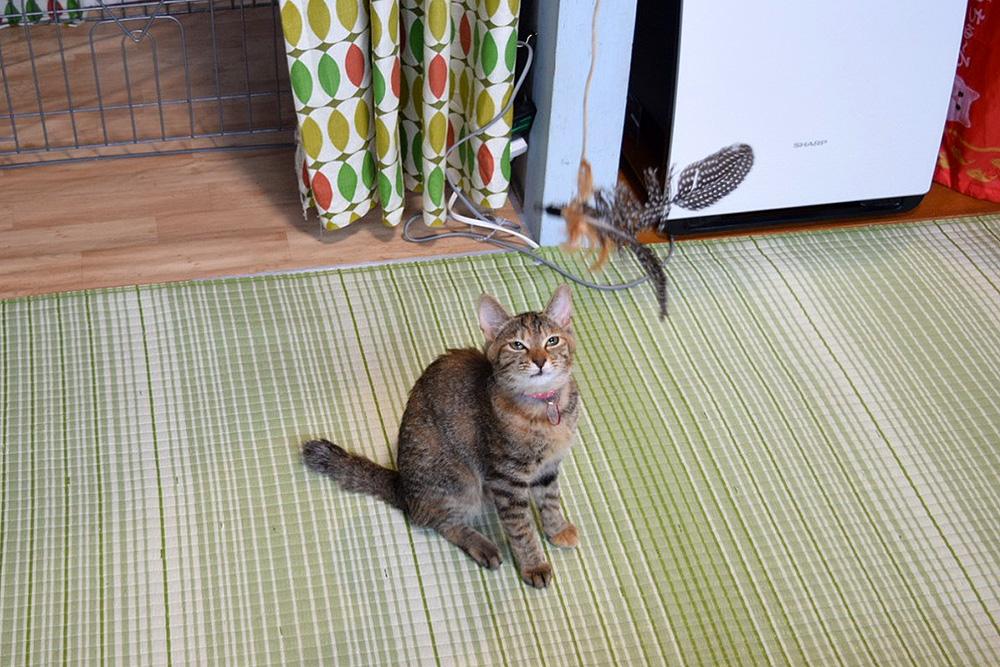里親探し猫カフェおっぽ