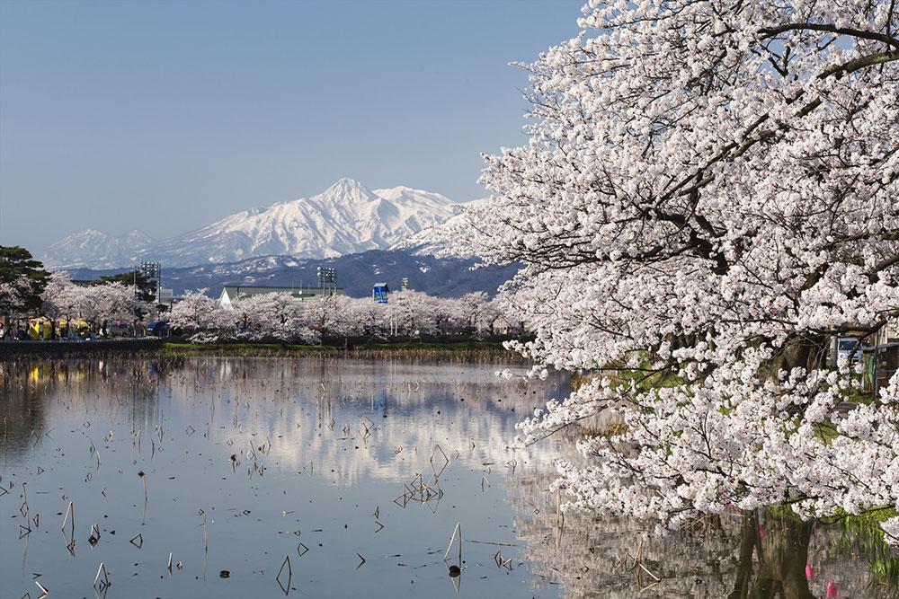 高田城址公園観桜会