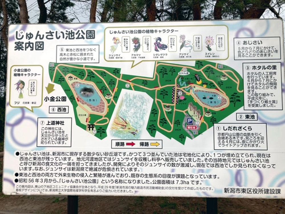 じゅんさい池公園_新潟_桜