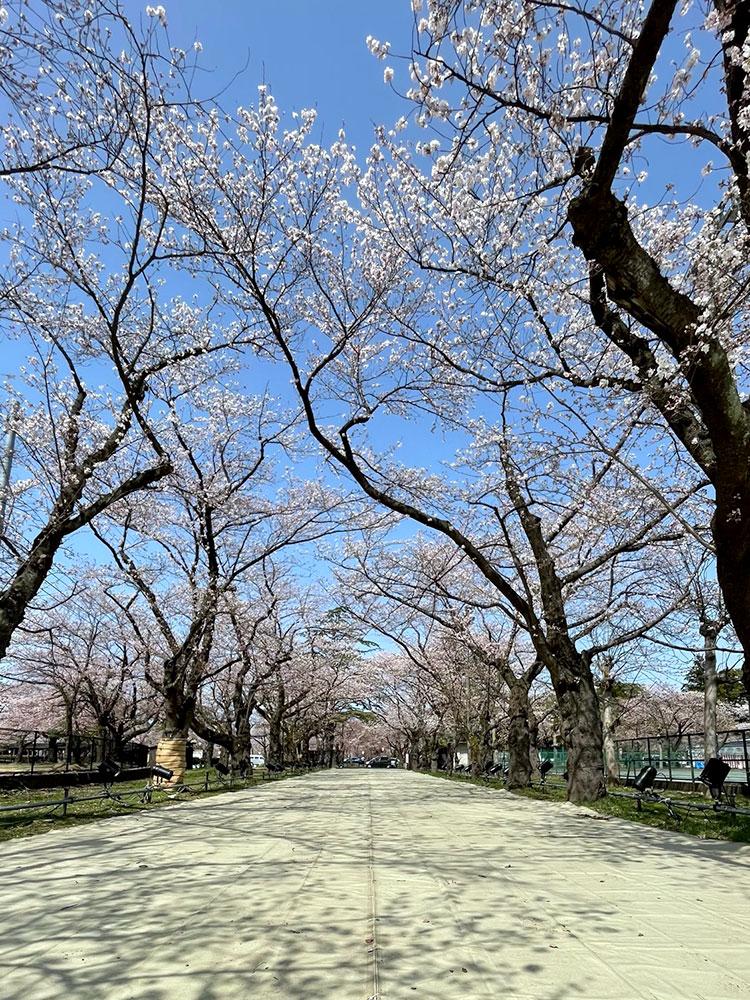 高田城址公園(2021年3月29日撮影)